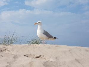 Texel-vakantiehuisje huren De Krim Texel