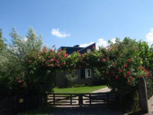 Texel-vakantiehuisje De Krim Texel bloemenzee